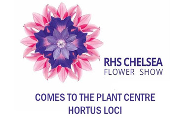 Chelsea Flower Show comes to Hortus Loci